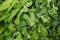 Organisk grönsak på bondemarknaden Royaltyfria Foton