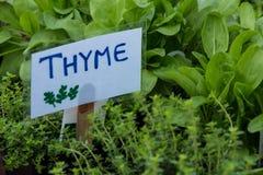 Organisk grönsak på bondemarknaden Royaltyfri Fotografi