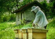 organisk honung Arkivbilder
