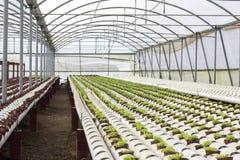 Organisk hydroponic grönsakodlinglantgård på bygd, Jordan Valley Arkivfoton