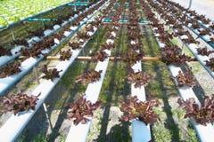 Organisk lantgård Arkivbilder