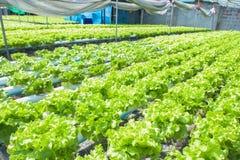 Organisk lantgård Arkivfoton