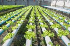 Organisk lantgård Royaltyfri Bild