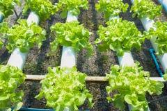 Organisk lantgård Fotografering för Bildbyråer