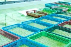 Organisk lantgård Arkivbild