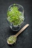 Organisk mikro-gräsplan i ett exponeringsglas och en sked på en svart bakgrund Detoxification av kroppen, en sund livsstil royaltyfria foton