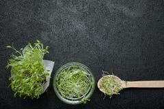 Organisk mikro-gräsplan på en svart bakgrund, tomt utrymme för text royaltyfri foto