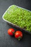 Organisk mikro-gräsplan sallad i en plast- behållare med röda tomater Anti--spänning produkt arkivfoto