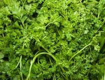 organisk parsley royaltyfri bild