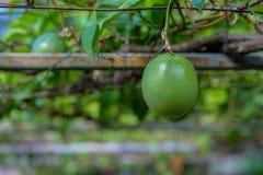 Organisk passionfrukt Arkivbild