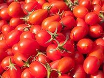 organisk röd tomat Arkivfoto
