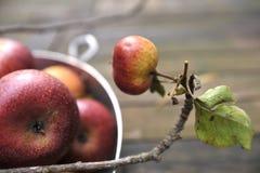 organisk red för äpplen Royaltyfri Bild