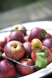organisk red för äpplen Royaltyfria Foton