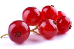 organisk red för vinbär royaltyfri bild