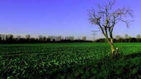 Organisk salladkoloni med blå himmel arkivfoto