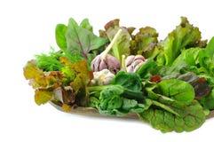 Organisk salladsidor och vitlök för blandning Royaltyfria Bilder
