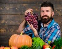 Organisk skördbonde för grönsaker som är stolt av skördgrönsaker och druvor Lantbruk- och plockningbegrepp Uppsökt man fotografering för bildbyråer