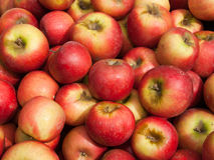 organisk sundowner för äpplen Royaltyfria Foton