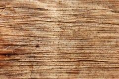 organisk textur Arkivbilder