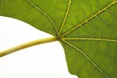 organisk tillväxt Royaltyfri Bild