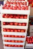 Organisk tomat i spjällådor på bondemarknaden som är klar till försäljningen Royaltyfri Fotografi