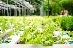 Organisk trädgård. Arkivfoto