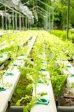 Organisk trädgård. Arkivfoton
