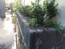 Organisk trädgård bak huset Arkivfoton