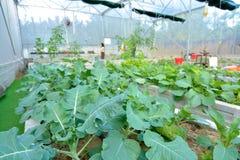 Organisk trädgård med droppbevattning Arkivfoton