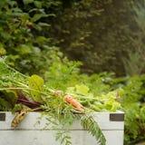 Organisk trädgårds- skörd arkivfoto