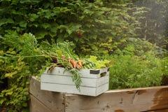 Organisk trädgårds- skörd arkivfoton