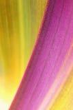 organisk växt för bakgrund Royaltyfri Fotografi