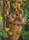 Organisk valnöt i en dekorativ hink fotografering för bildbyråer
