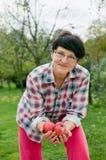 Organiska äpplen royaltyfri fotografi