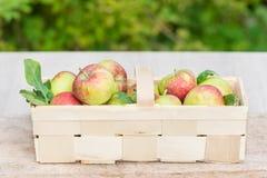 Organiska äpplen i en bred träkorg Arkivfoton