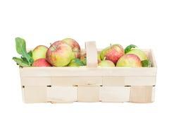 Organiska äpplen i en bred träkorg isolerat Arkivfoton