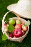 Organiska äpplen i en korg royaltyfri foto
