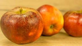 Organiska äpplen i rött royaltyfria foton