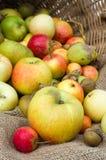 Organiska äpplen på skärm i en korg Arkivfoto
