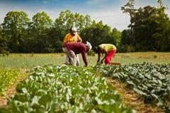 Organiska bönder royaltyfria bilder