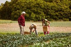 Organiska bönder Royaltyfri Bild