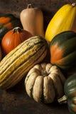 Organiska blandade Autumn Squash Fotografering för Bildbyråer