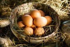 Organiska bruna ägg i sugrör arkivbild