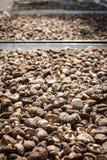 Organiska champinjoner Royaltyfria Foton