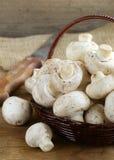 Organiska champinjoner (champignons) Arkivfoton