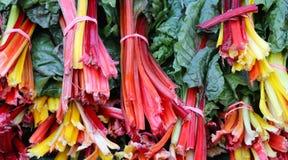 Organiska för regnbågeblandning för schweizisk Chard Veggies på bondes marknad royaltyfria foton