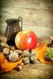 Organiska frukter för höst - säsongsbetonade frukter Royaltyfri Fotografi