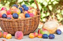 Organiska frukter - nya frukter i vide- korg Arkivfoto