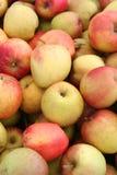 Organiska Fuji äpplen arkivbild
