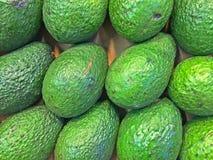 Organiska gröna avokadon Arkivfoto
